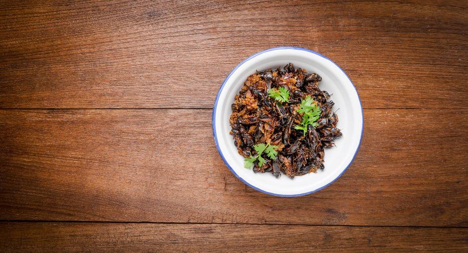 novel food e start up: mangiare grilli fa guadagnare. i fondi per