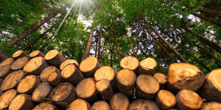 deforestazione-biodiversità-investire